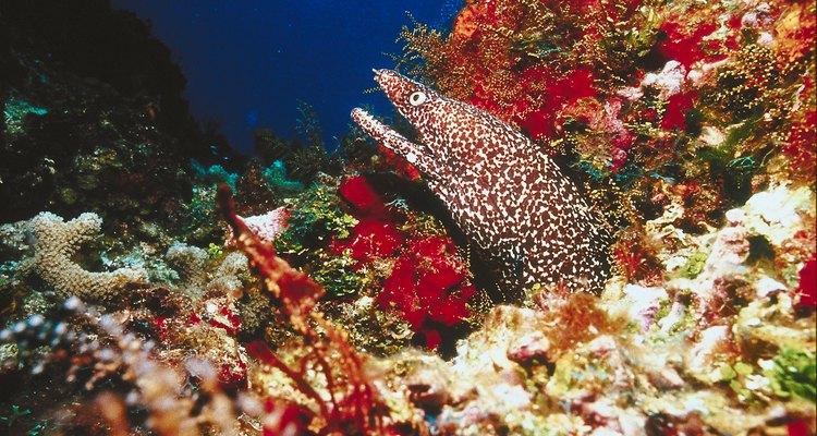 El gran arrecife maya, el segundo más largo del mundo, ofrece espectaculares vistas subacuáticas.