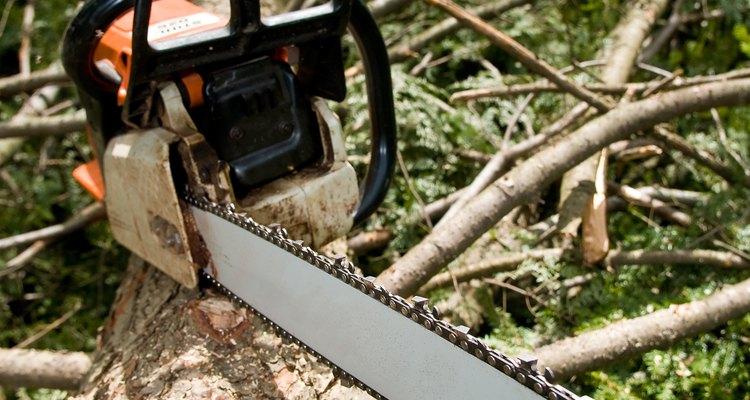 O desmatamento através da exploração de madeira ilustra uma forma invasiva de sucessão destrutiva