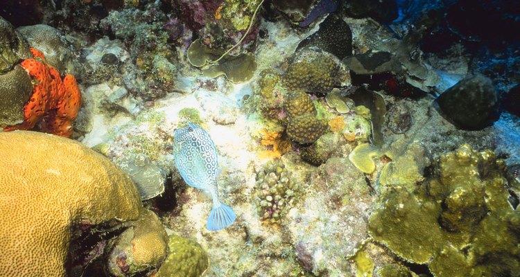 Animais no fundo do oceano se adaptaram à alta pressão