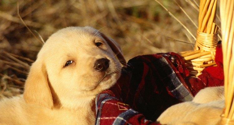 Enseñar a un perro a hacer trucos es fácil, sobre todo cuando es joven.