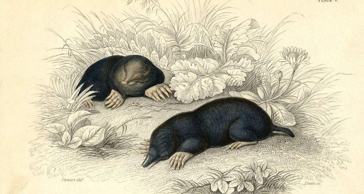 Los roedores pueden dejar hoyos en tu jardín.