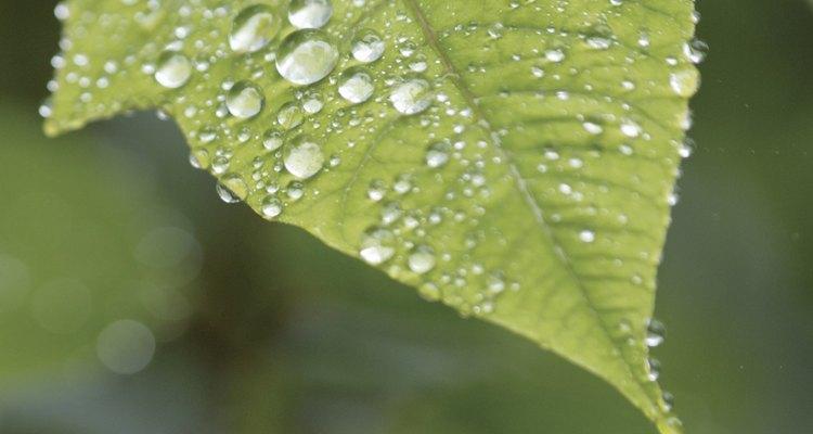 En la selva tropical llueven entre 40 a 400 pulgadas por año.