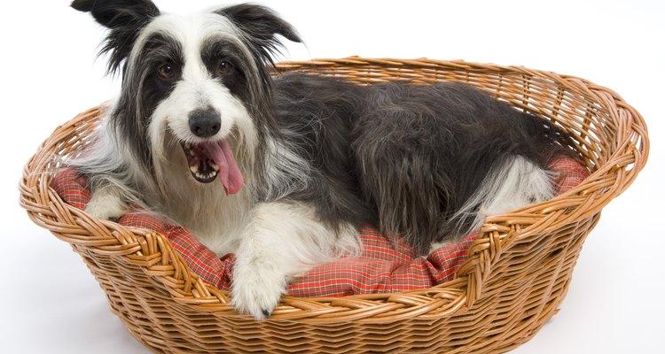 El olor de la cama de tu perro varía dependiendo de lo que este haga diariamente.