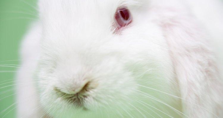 Os coelhos doentes podem sofrer de problemas respiratórios