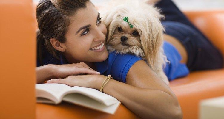 Un perro maltés en el hombro de una mujer.