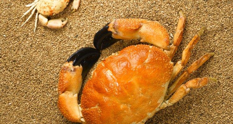 Caranguejos, lagostas, camarões, insetos e aracnídeos são artrópodes