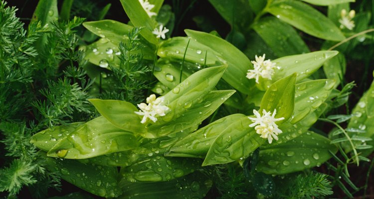 Get the look of natural rain drops with craft supplies.