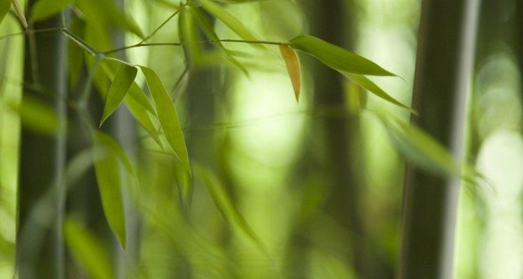 Quita los crecimientos no deseados antes del comienzo del verano.