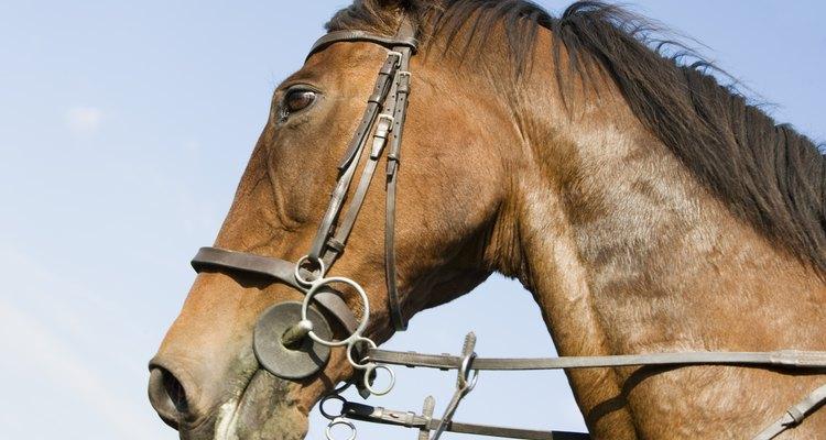 Las distintas riendas permiten distintos tipos de control sobre el caballo.