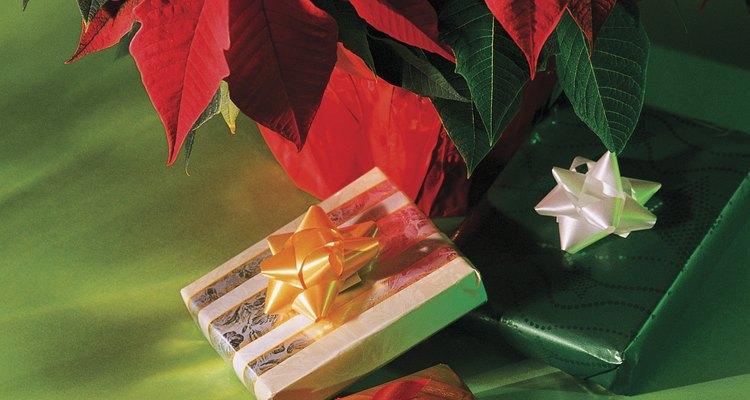 """A poinsétia, também chamada de """"papagaio"""" e """"flor-de-natal"""", possui folhas verdes e vermelhas"""