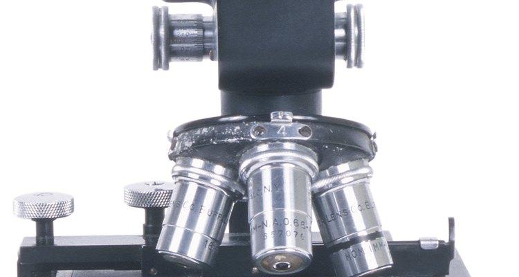 As lentes objetivas de microscópio são aquelas mais próximos da amostra examinada