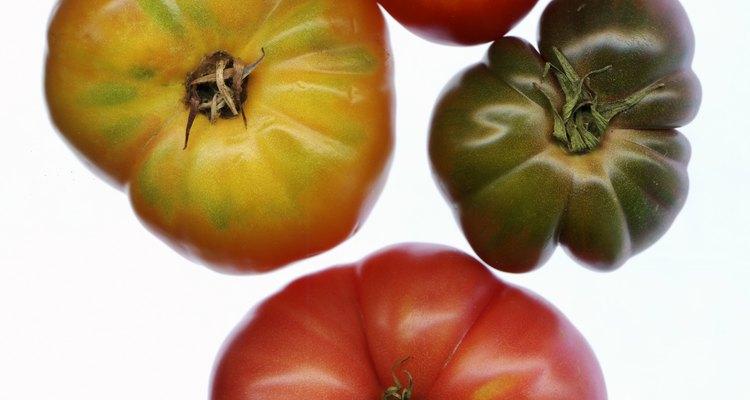 Las variedades de tomates de reliquia son de polinización abierta.