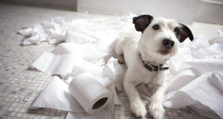 Los cachorros suelen ser juguetones.