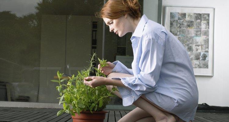 A las mujeres de tauro les gusta cuidar su jardín.