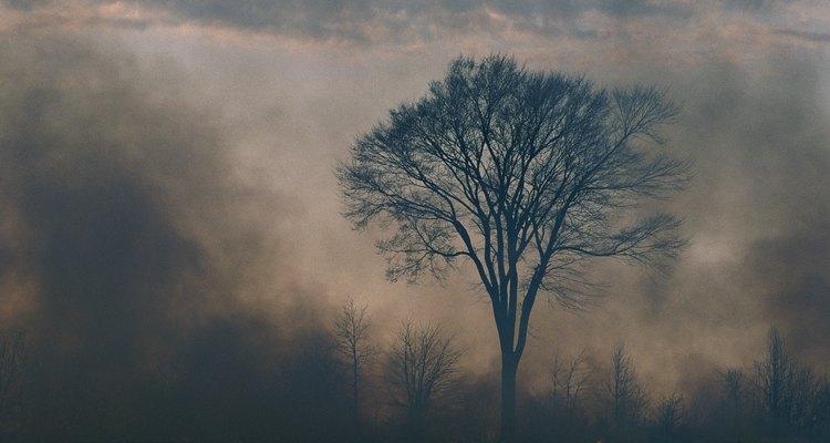Incêndios - naturais e causados por humanos - são importantes na manutenção de campos