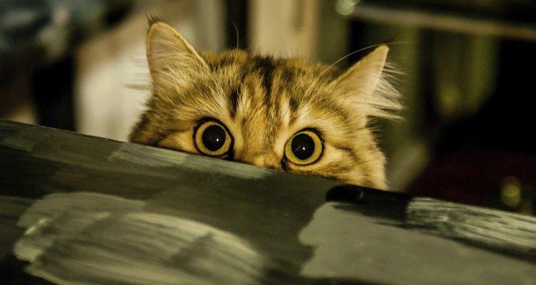 Saber quais sons os gatos acham irritantes pode ajudar a criar um ambiente sem estresse para seu animal de estimação