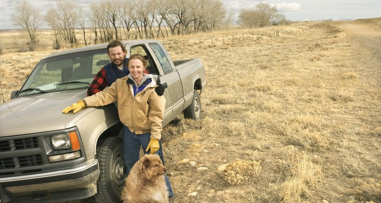 De viaje con tu perro en camioneta.
