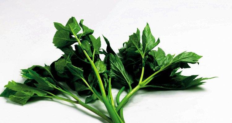 Vegetais de folhas como o espinafre são uma boa fonte de ferro e vitamina B