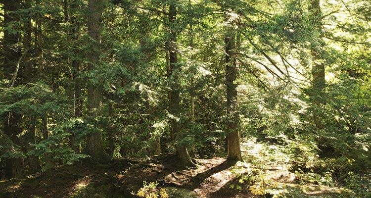 Los bosques templados crecen en climas templados.