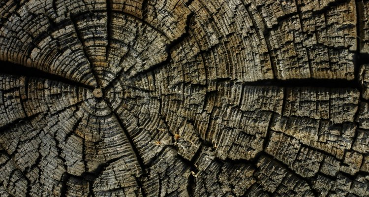 Qual tipo de madeira é melhor para o seu projeto?