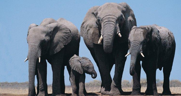 Varios grupos familiares pueden optar por migrar juntos en vez de participar en una migración masiva.