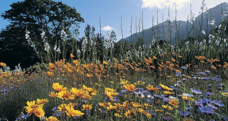 Comienza a partir de semillas o busca plantas en tu centro de jardinería local en la primavera.