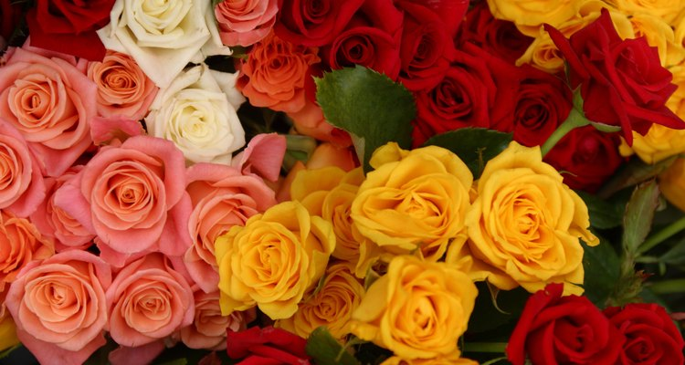 You can grow colourful roses in tubs.