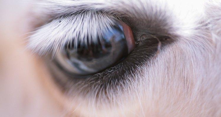 Limpe os olhos de seu cavalo regularmente