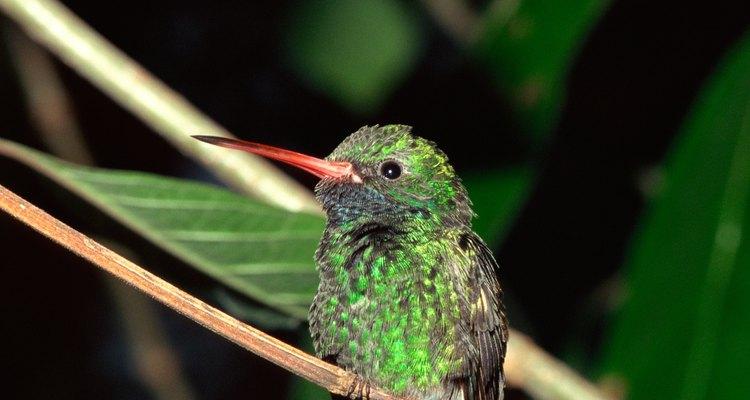 Esta fórmula es adecuada tanto para alimentadores de colibríes como de oriólidos.