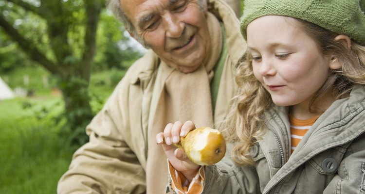 Unhealthy pear trees might not produce fruit.