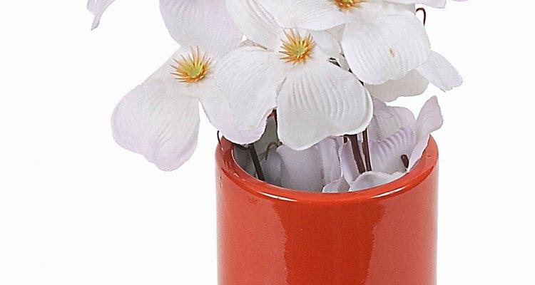 Corta las orquídeas desde los vástagos.
