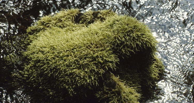 Remove moss from gravel to prevent slips and falls.