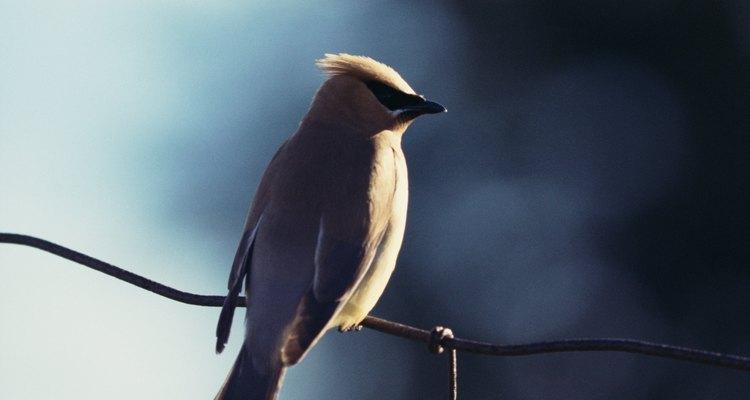 Os cientistas descobriram que a cada ano entre quatro e dez milhões de aves são mortas em colisões com edifícios e torres