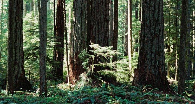 Los animales viven a diferentes niveles en el bosque tropical, desde el suelo hasta las copas de los árboles.
