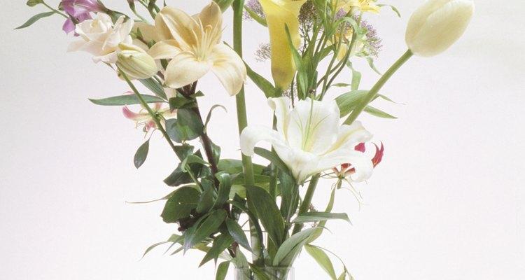Desecha la planta cuando las floraciones se desvanezcan.