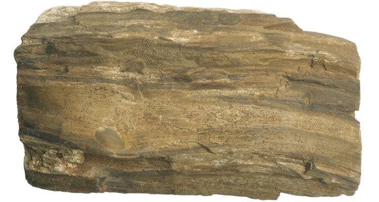 Como petrificar a madeira