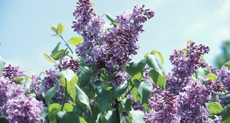 Encha uma cesta com flores de cor lilás para uma conferência de primavera