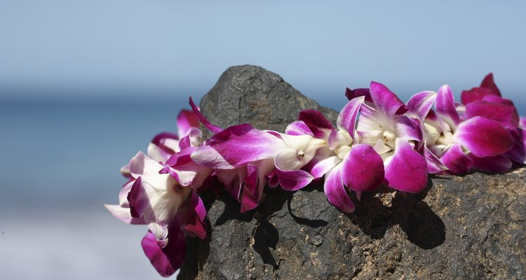 Lei on volcanic rock in Maui