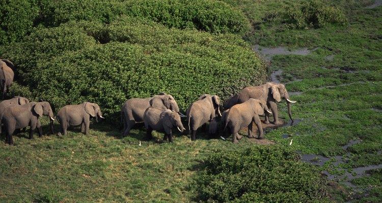 Cualquier cambio de hábitat afecta a los animales.