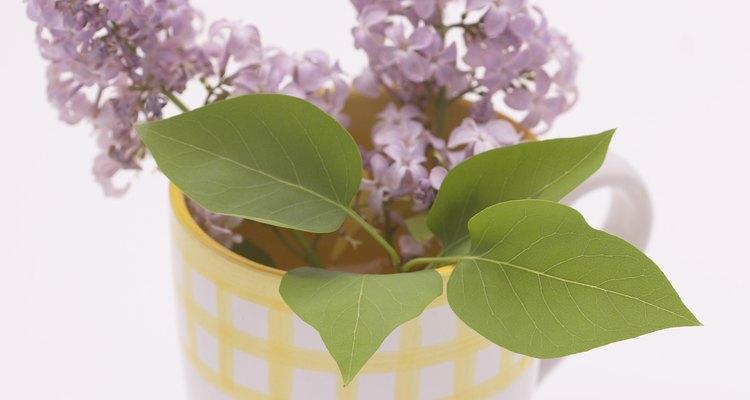 Incluso una semana después de sacarlas de su fuente principal de alimentos, las flores siguen viéndose frescas.