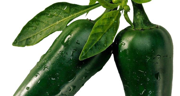 Cosecha los chiles pimiento cuando las vainas estén de color verde brillante y resistan apretar.