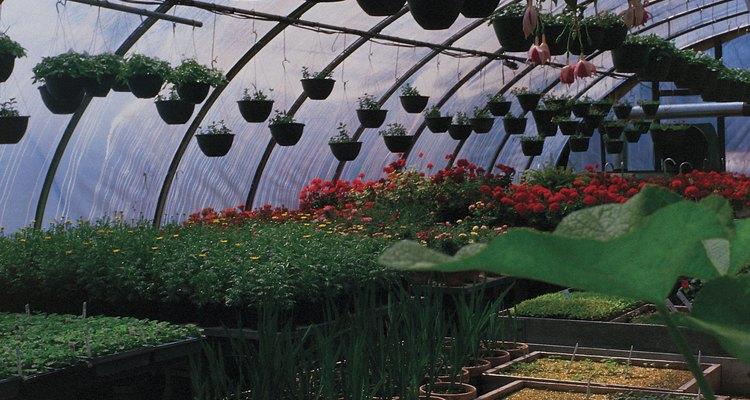 Los centros horticulturales en su mayoría tienen una gran variedad de plantas, con tendencia hacia las especies más populares.