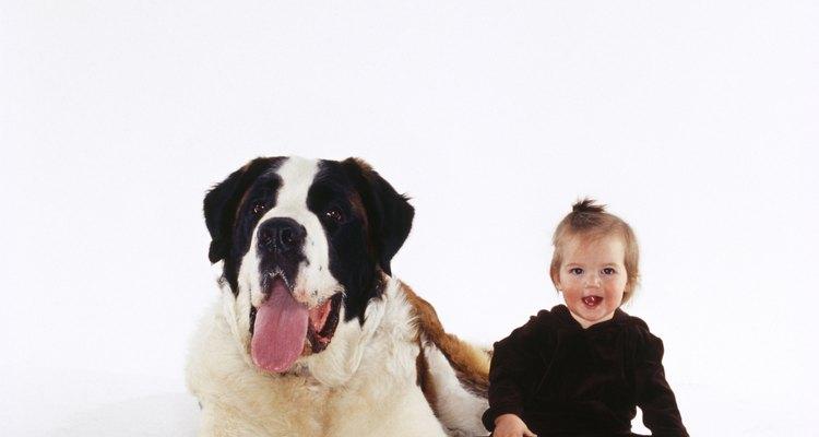 Un perro puede ser una parte educacional en la vida de tu bebé.