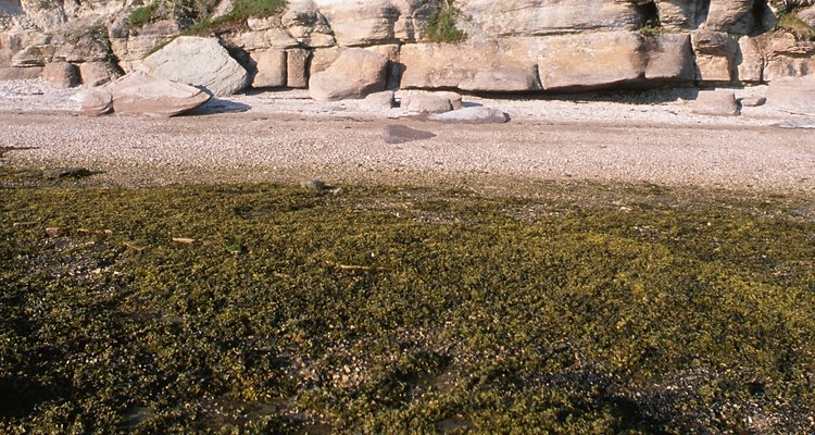 Seaweed usually floats on the top of the water.
