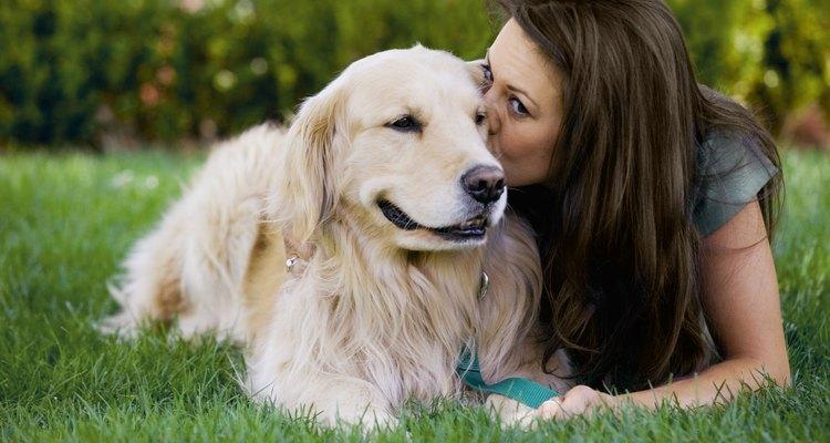Un perro con un resfriado puede no tener energías suficientes para jugar.