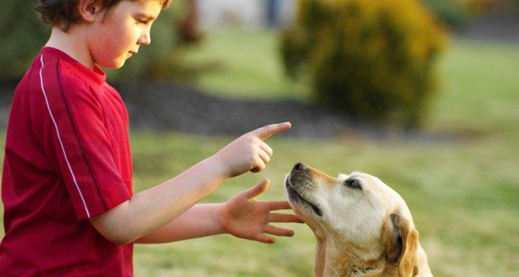 As verrugas em um labrador são causadas pelo papiloma vírus canino