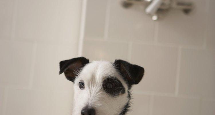 Lave aquelas patas fedorentas com um pouco de vinagre e shampoo perfumado para cão