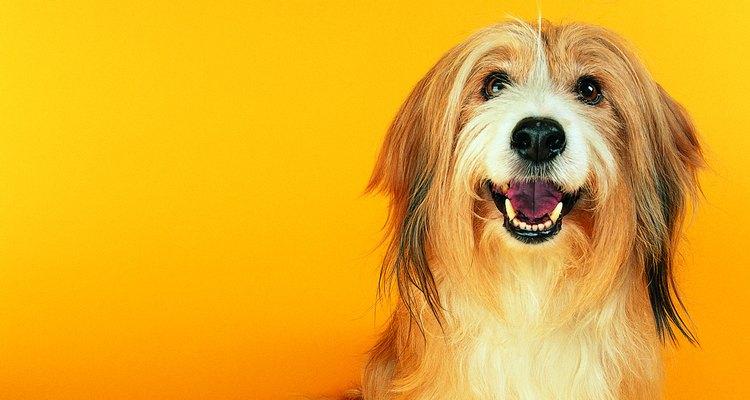 A azia é bastante comum em cães e pode ocorrer em qualquer idade