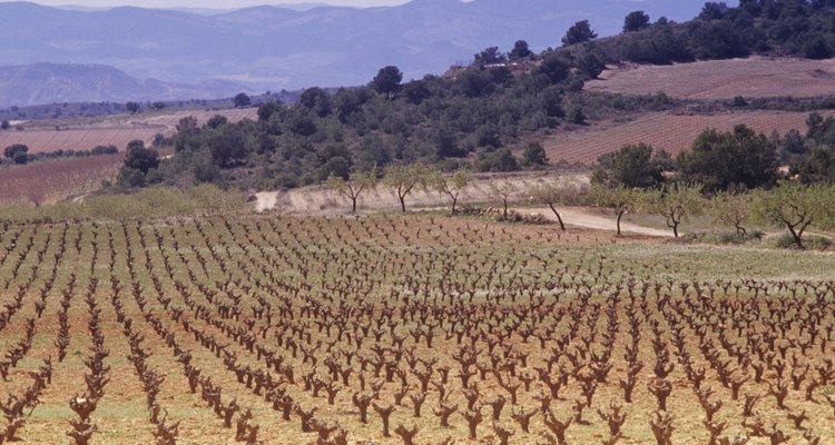 Grazelma te ofrece una excelente opción para sacar tu bicicleta y adentrarte en los lugares remotos de Andalucía.
