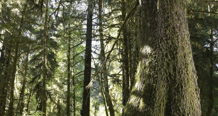 As forestas temperadas estão restritas a pequenas áreas, muitas vezes perto das áreas costeiras
